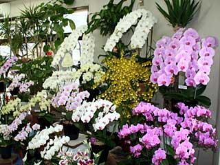 Flower Shop Shuka